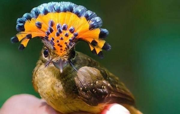 Тропические-птицы-Описание-названия-виды-и-фото-тропических-птиц-3