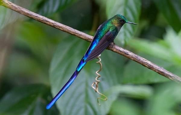 Тропические-птицы-Описание-названия-виды-и-фото-тропических-птиц-30