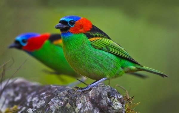 Тропические-птицы-Описание-названия-виды-и-фото-тропических-птиц-34