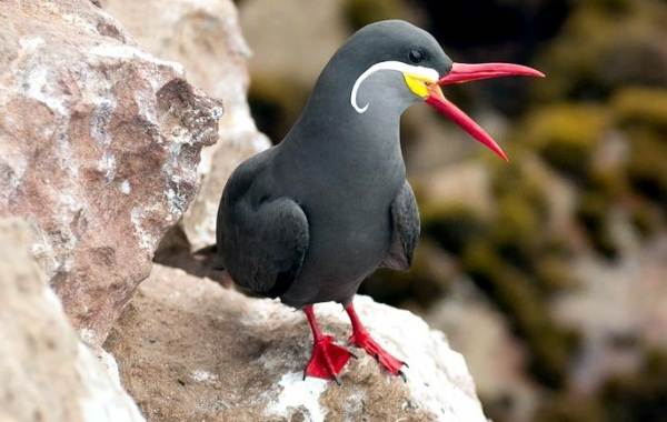 Тропические-птицы-Описание-названия-виды-и-фото-тропических-птиц-37