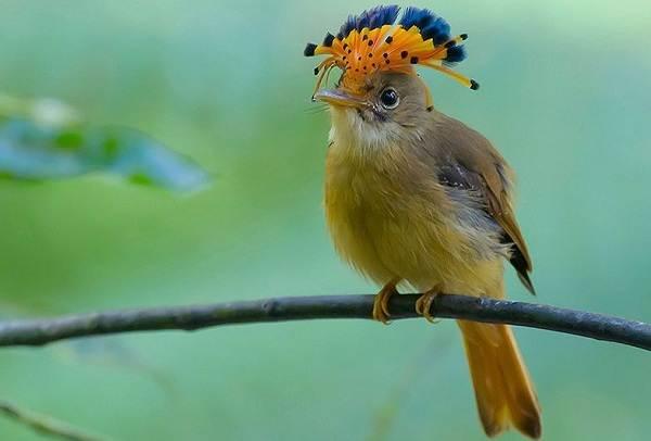 Тропические-птицы-Описание-названия-виды-и-фото-тропических-птиц-4