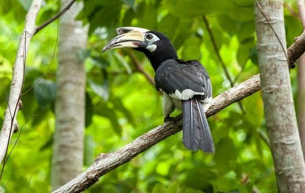 Тропические-птицы-Описание-названия-виды-и-фото-тропических-птиц-5