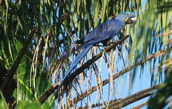 Тропические-птицы-Описание-названия-виды-и-фото-тропических-птиц-6