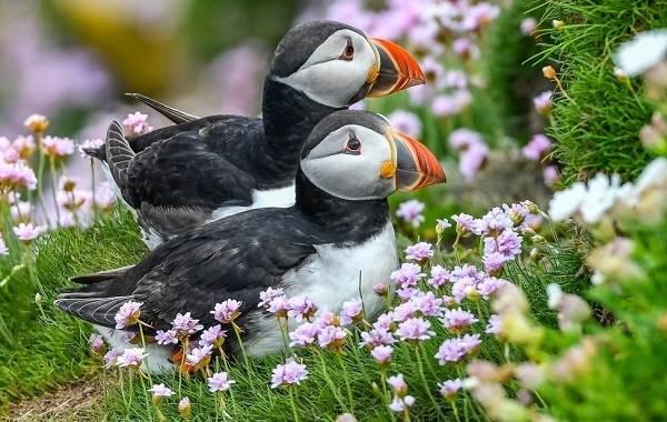 Тропические-птицы-Описание-названия-виды-и-фото-тропических-птиц-7