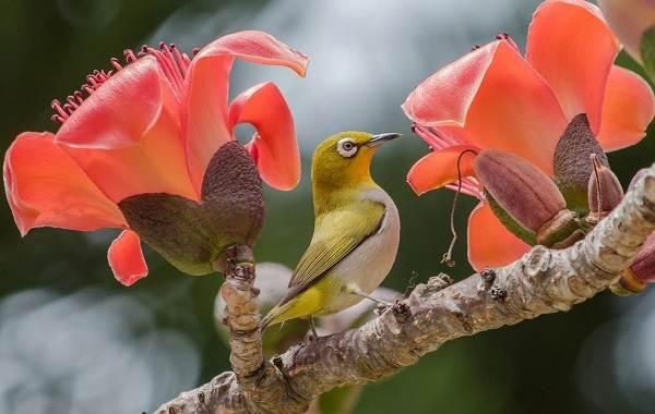 Тропические-птицы-Описание-названия-виды-и-фото-тропических-птиц