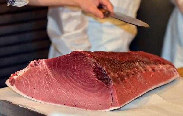 Тунец-рыба-Описание-особенности-виды-образ-жизни-и-среда-обитания-тунца-5