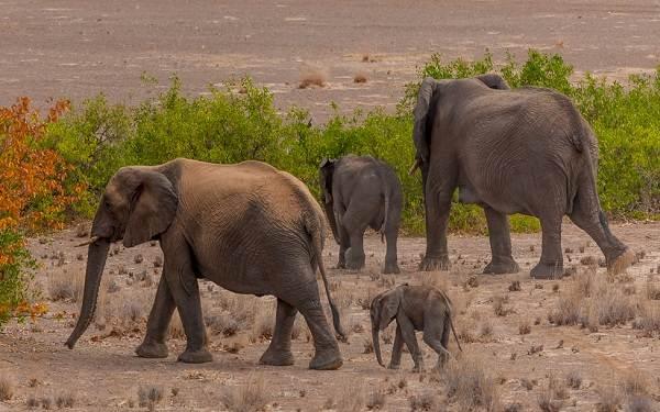 Виды-слонов-Описание-особенности-среда-обитания-и-фото-видов-слонов-12