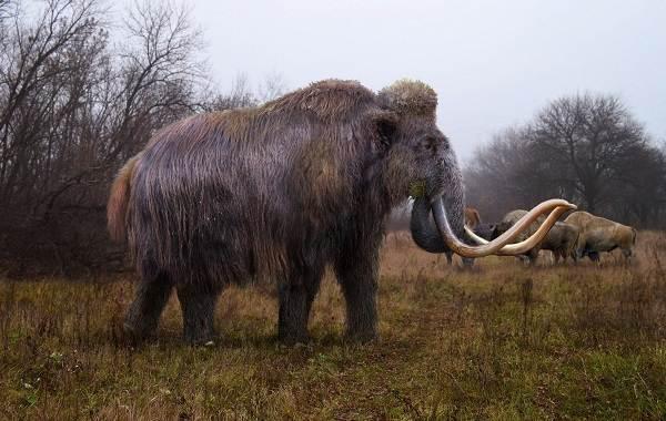 Виды-слонов-Описание-особенности-среда-обитания-и-фото-видов-слонов-3