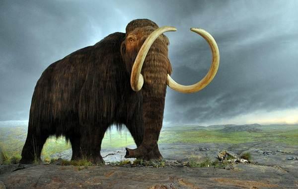 Виды-слонов-Описание-особенности-среда-обитания-и-фото-видов-слонов-5