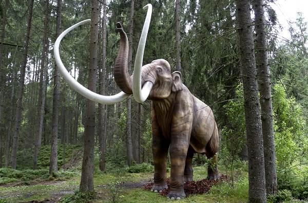 Виды-слонов-Описание-особенности-среда-обитания-и-фото-видов-слонов-6