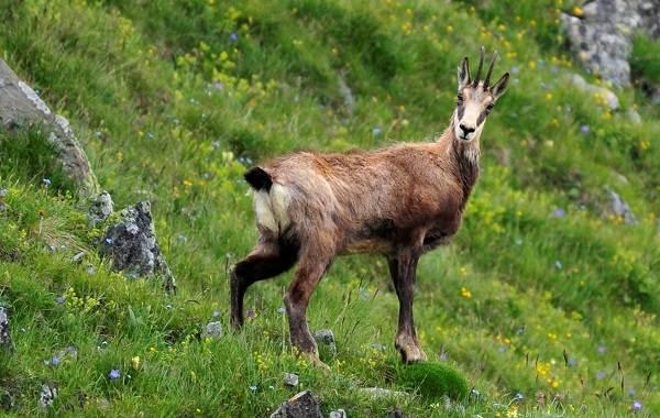 Животные-Краснодарского-края-Описание-названия-виды-и-фото-животных-Краснодарского-края-11