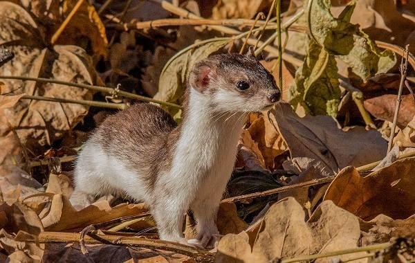 Животные-Краснодарского-края-Описание-названия-виды-и-фото-животных-Краснодарского-края-16
