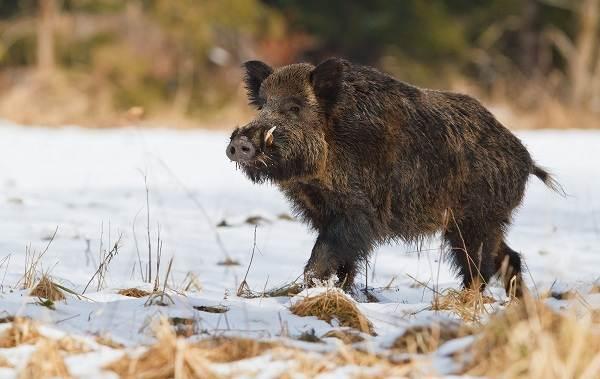 Животные-Краснодарского-края-Описание-названия-виды-и-фото-животных-Краснодарского-края-17
