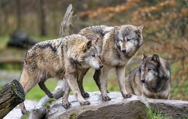 Животные-Краснодарского-края-Описание-названия-виды-и-фото-животных-Краснодарского-края-18