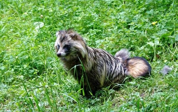 Животные-Краснодарского-края-Описание-названия-виды-и-фото-животных-Краснодарского-края-21