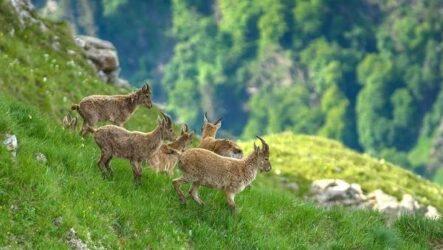 Животные Краснодарского края. Описание, названия, виды и фото животных Краснодарского края
