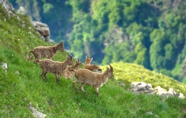 Животные-Краснодарского-края-Описание-названия-виды-и-фото-животных-Краснодарского-края-3