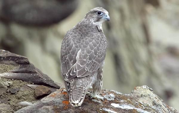 Животные-Краснодарского-края-Описание-названия-виды-и-фото-животных-Краснодарского-края-43