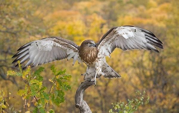 Животные-Краснодарского-края-Описание-названия-виды-и-фото-животных-Краснодарского-края-45