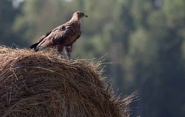 Животные-Краснодарского-края-Описание-названия-виды-и-фото-животных-Краснодарского-края-46