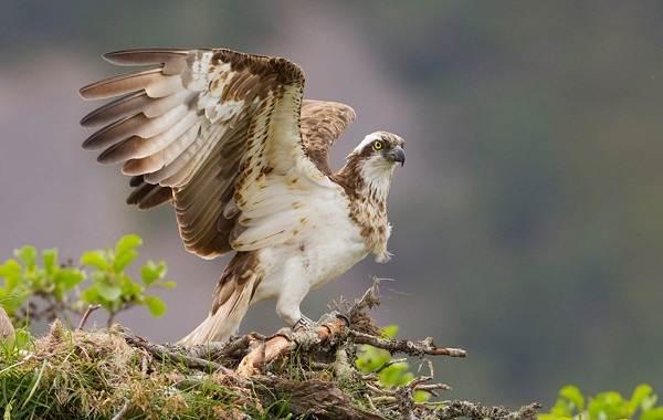 Животные-Краснодарского-края-Описание-названия-виды-и-фото-животных-Краснодарского-края-47