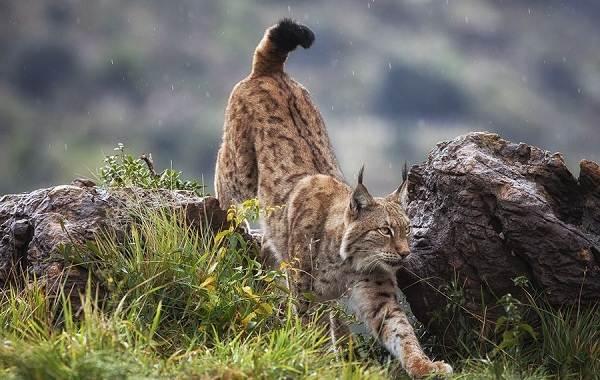 Животные-Краснодарского-края-Описание-названия-виды-и-фото-животных-Краснодарского-края-6