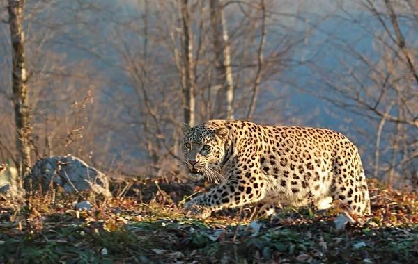 Животные-Краснодарского-края-Описание-названия-виды-и-фото-животных-Краснодарского-края-7