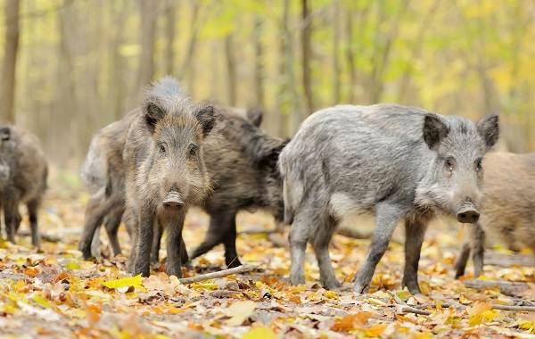 Животные-Ставропольского-края-Описание-названия-виды-и-фото-животных-Ставропольского-края-5