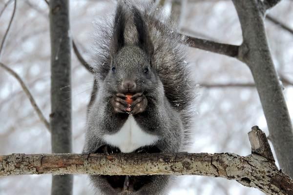Животные-Ставропольского-края-Описание-названия-виды-и-фото-животных-Ставропольского-края-68