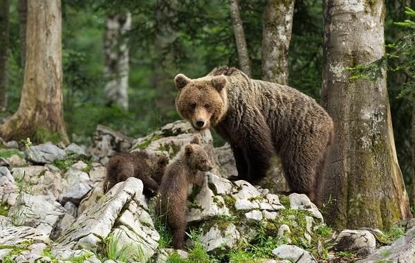 Животные-Ставропольского-края-Описание-названия-виды-и-фото-животных-Ставропольского-края-7