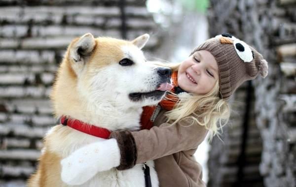 Акита-ину-собака-Описание-особенности-виды-уход-содержание-и-цена-породы-акита-ину-16