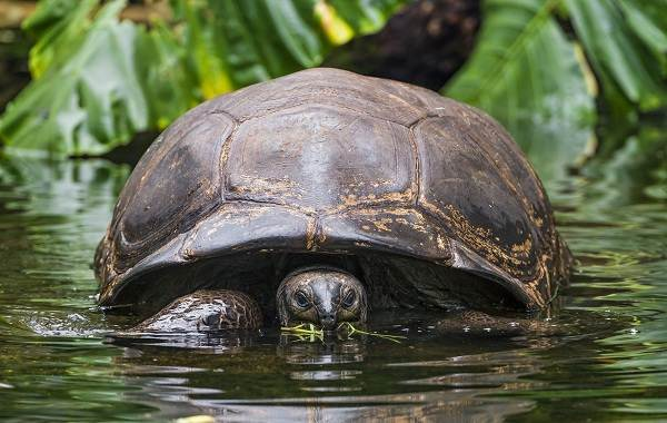 Болотная-черепаха-Описание-особенности-виды-образ-жизни-и-среда-обитания-пресмыкающегося-6