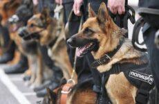 Служебные собаки. Описание, особенности, дрессировка и породы служебных собак