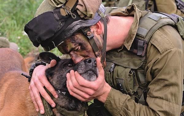 Служебные-собаки-Описание-особенности-дрессировка-и-породы-служебных-собак-17