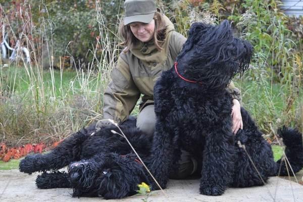 Служебные-собаки-Описание-особенности-дрессировка-и-породы-служебных-собак-19