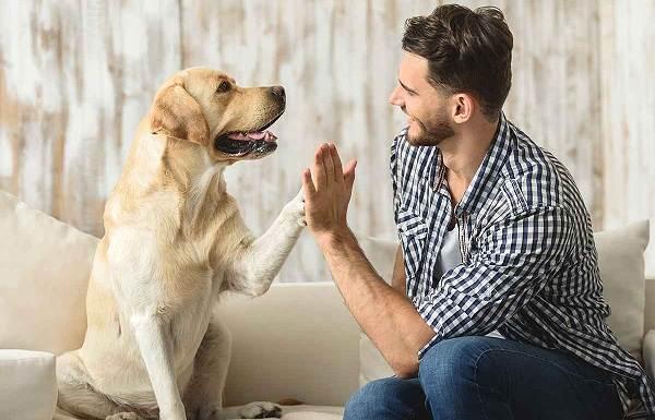 Добрые-породы-собак-Названия-описание-особенности-и-фото-добрых-пород-собак-1