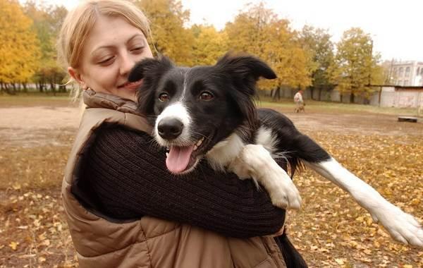 Добрые-породы-собак-Названия-описание-особенности-и-фото-добрых-пород-собак-11