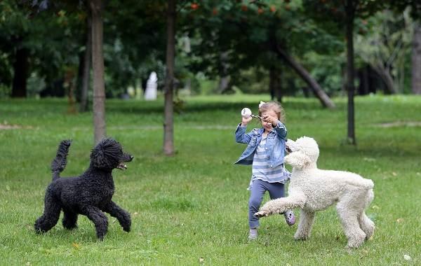 Добрые-породы-собак-Названия-описание-особенности-и-фото-добрых-пород-собак-12
