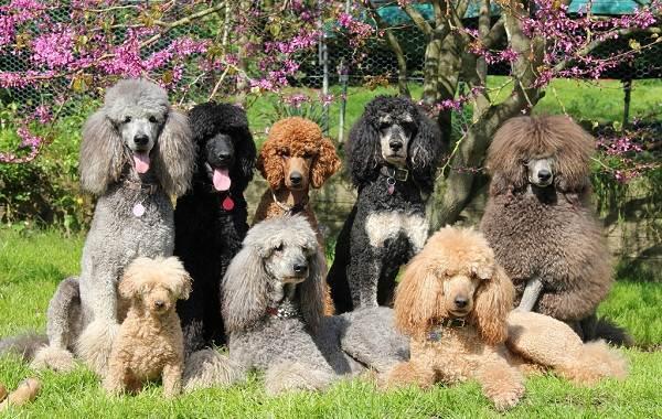 Добрые-породы-собак-Названия-описание-особенности-и-фото-добрых-пород-собак-13