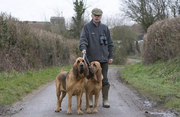 Добрые-породы-собак-Названия-описание-особенности-и-фото-добрых-пород-собак-17