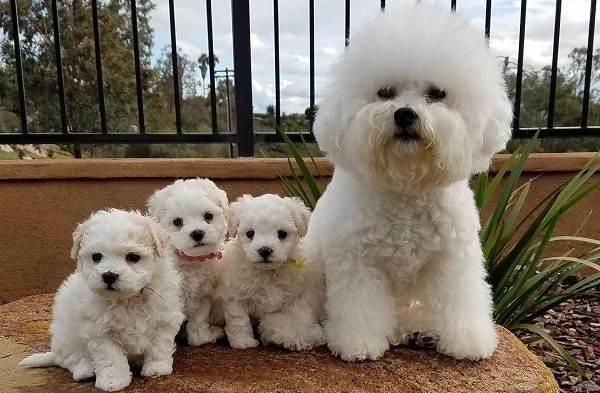 Добрые-породы-собак-Названия-описание-особенности-и-фото-добрых-пород-собак-18