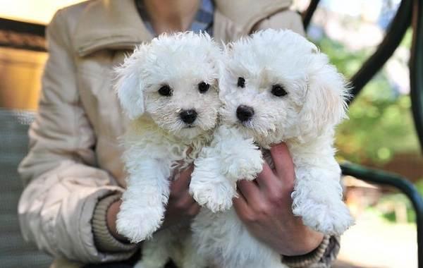 Добрые-породы-собак-Названия-описание-особенности-и-фото-добрых-пород-собак-19