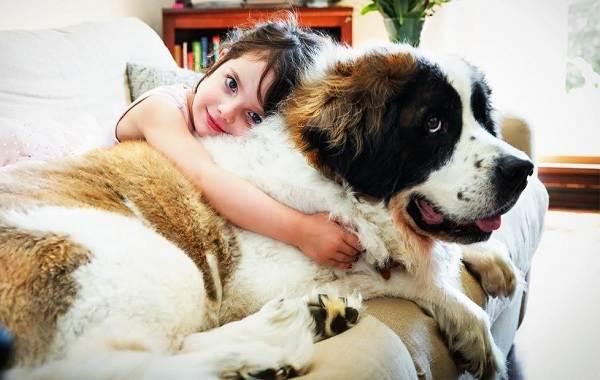 Добрые-породы-собак-Названия-описание-особенности-и-фото-добрых-пород-собак-2