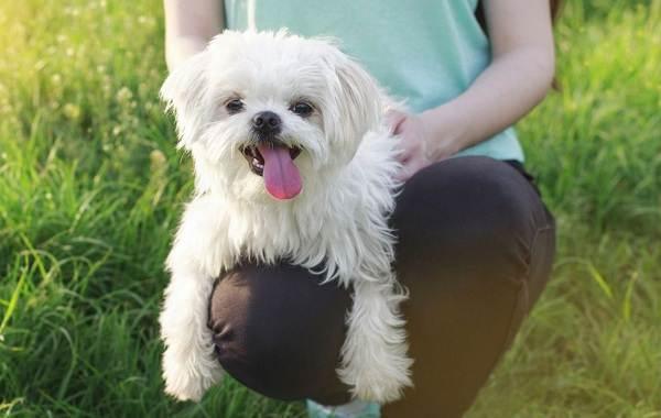 Добрые-породы-собак-Названия-описание-особенности-и-фото-добрых-пород-собак-20