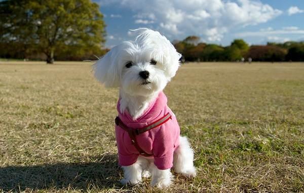 Добрые-породы-собак-Названия-описание-особенности-и-фото-добрых-пород-собак-21