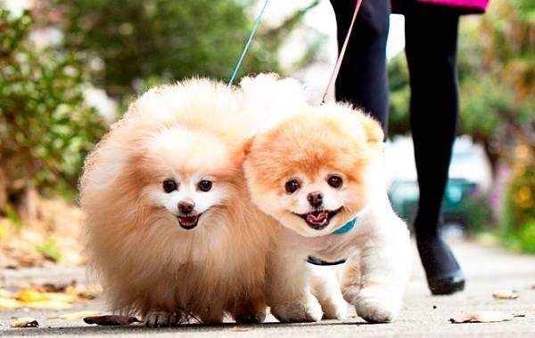 Добрые-породы-собак-Названия-описание-особенности-и-фото-добрых-пород-собак-23