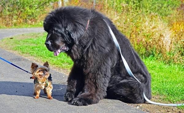 Добрые-породы-собак-Названия-описание-особенности-и-фото-добрых-пород-собак-4