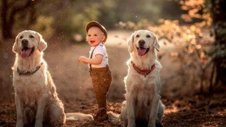 Добрые породы собак. Названия, описание, особенности и фото добрых пород собак