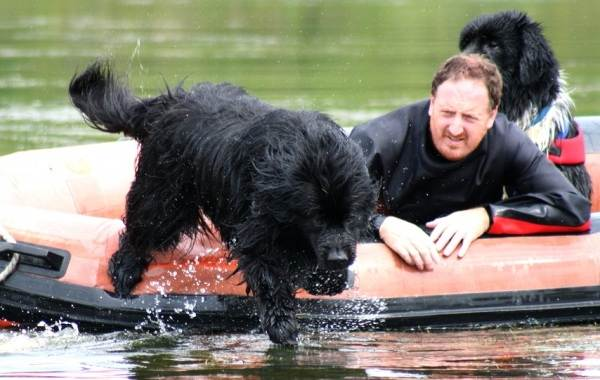 Добрые-породы-собак-Названия-описание-особенности-и-фото-добрых-пород-собак-5