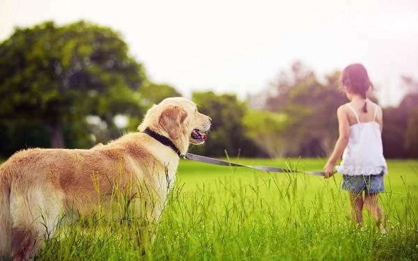 Добрые-породы-собак-Названия-описание-особенности-и-фото-добрых-пород-собак-6